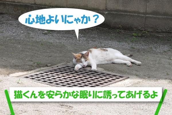 心地よいにゃか? 猫くんを安らかな眠りに誘ってあげるよ