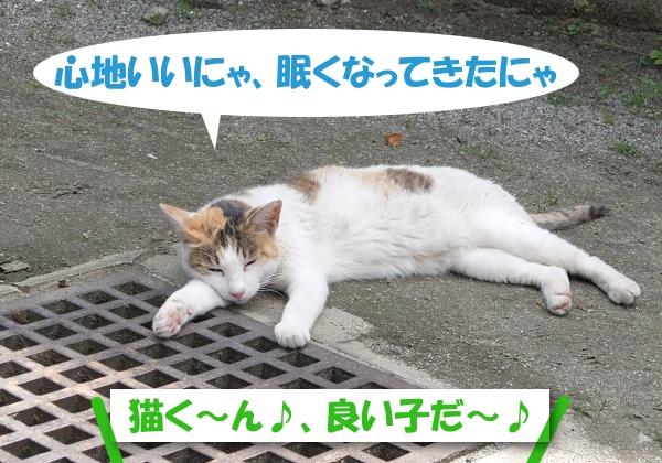 心地いいにゃ、眠くなってきたにゃ 猫くん、良い子だ~♪