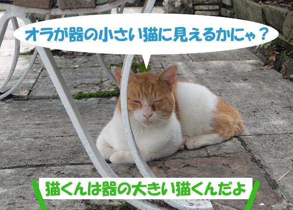 オラが器の小さい猫に見えるかにゃ? 猫くんは器の大きい猫くんだよ