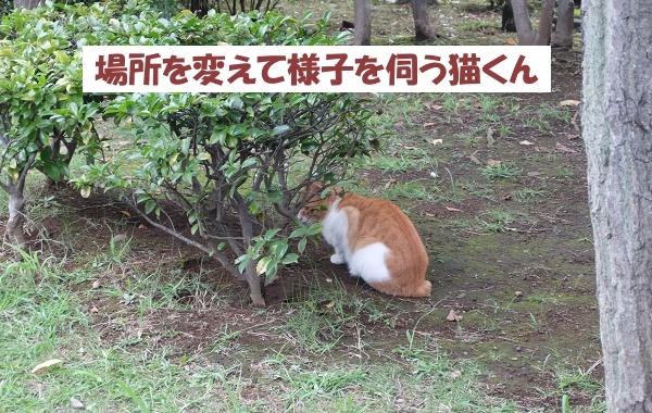 場所を変えて様子を伺う猫くん。