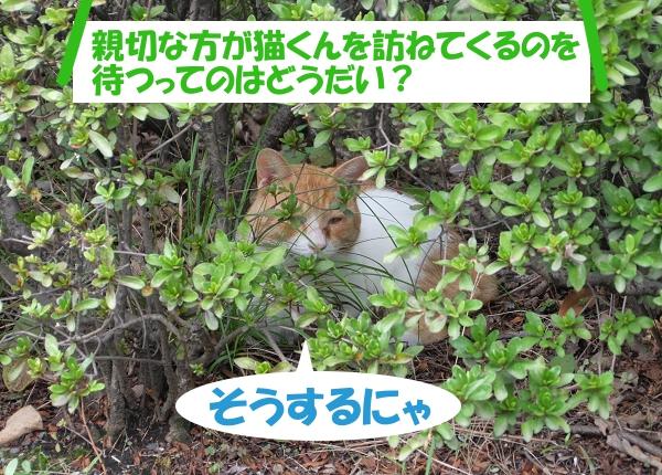親切な方が猫くんを訪ねてくるのを待つってのはどうだい? そうするにゃ。