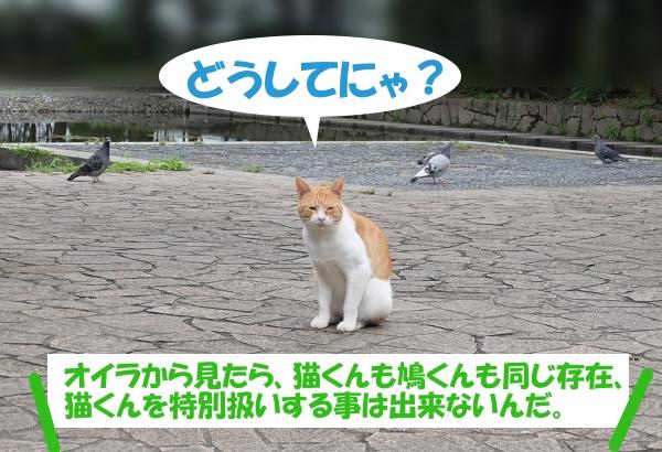 どうしてにゃ? オイラから見たら、猫くんも鳩くんも同じ存在、猫くんを特別扱いする事は出来ないんだ