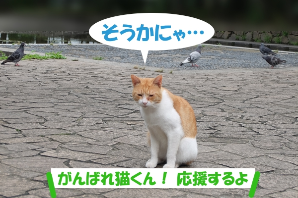 そうかにゃ… がんばれ猫くん!応援するよ