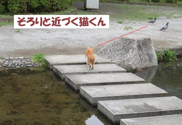 そろりと近づく猫くん