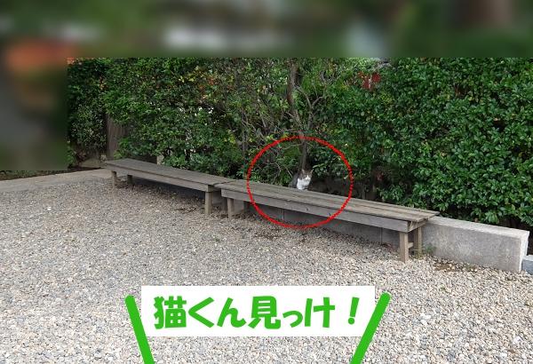 猫くん見っけ!