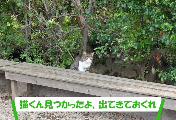 猫くん見つかったよ、出てきておくれ