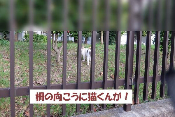 柵の向こうに猫くんが