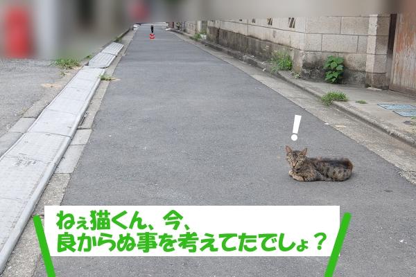ねぇ猫くん、今、良からぬ事を考えてたでしょ?