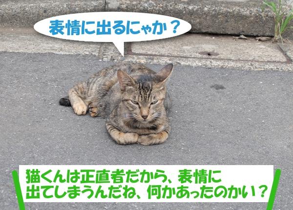 表情に出るにゃか? 猫くんは正直者だから出てしまうんだね、何かあったのかい?