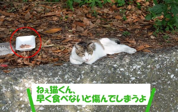 ねぇ猫くん、早くエサを食べないと傷んでしまうよ