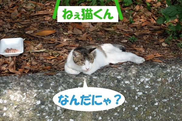 ねぇ猫くん なんだにゃ?