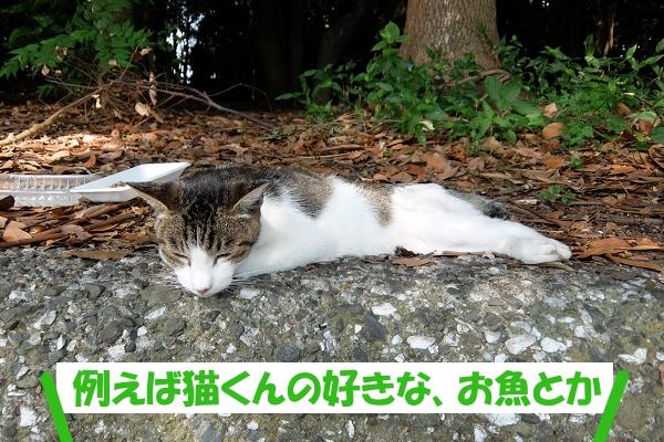 例えば猫くんの好きな、お魚とか