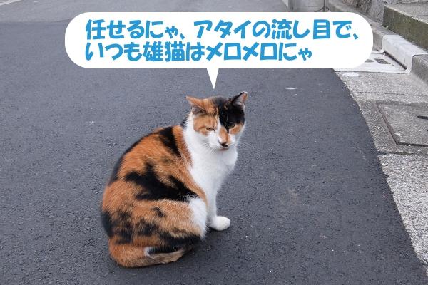 任せるにゃ、アタイの流し目で、いつも雄猫はメロメロにゃ