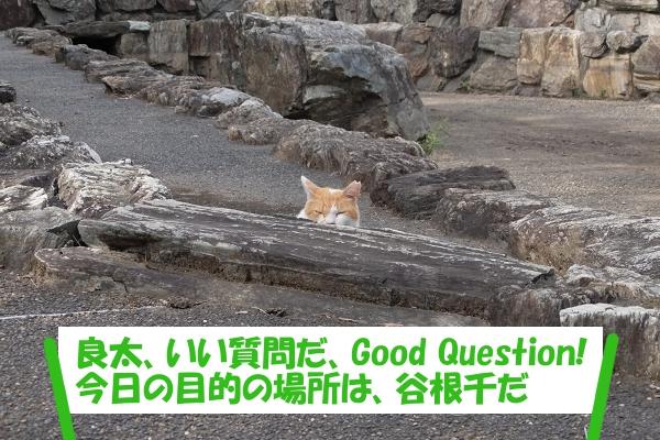 良太、いい質問だ、Good Question! 今日の目的の場所は、谷根千だ