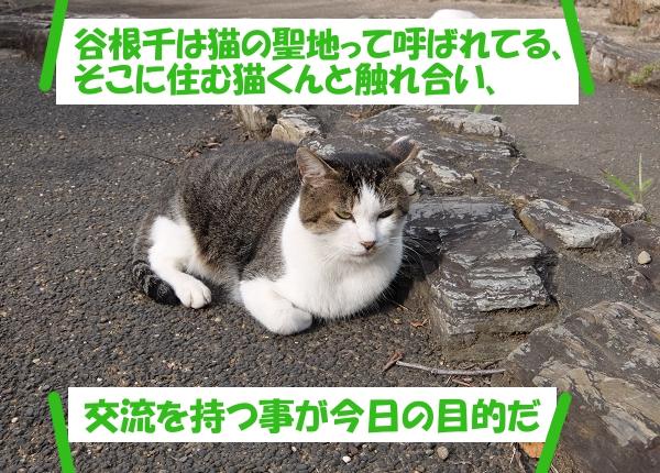 谷根千は猫の聖地って呼ばれてる、そこに住む猫くんと触れ合い、交流を持つ事が今日の目的だ