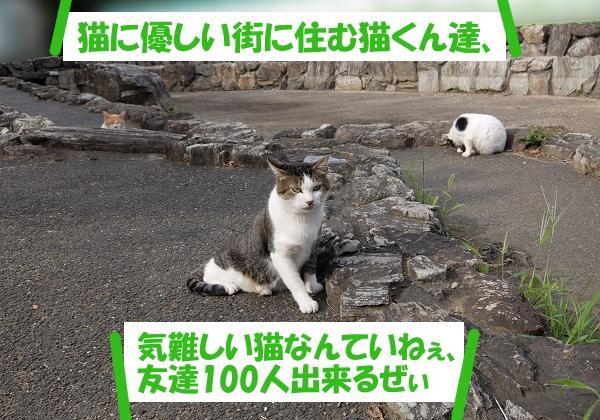 猫に優しい街に住む猫くん達、気難しい猫くんなんていねぇ、友達100人出来るぜぃ