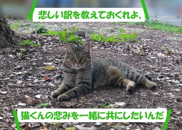 悲しい訳を教えておくれよ、猫くんの悲みを一緒に共にしたいんだ