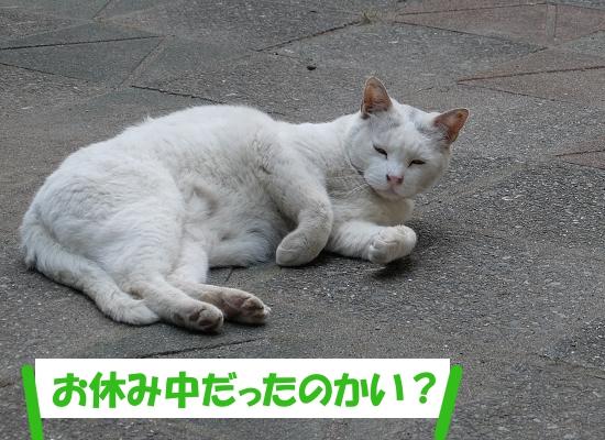 「猫くん、お休み中だったのかい?」
