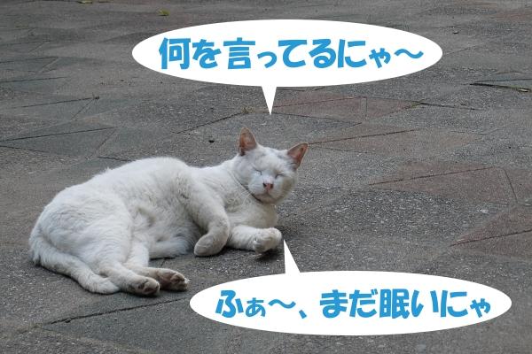 何を言ってるにゃ~ ふぁ~、まだ眠いにゃ
