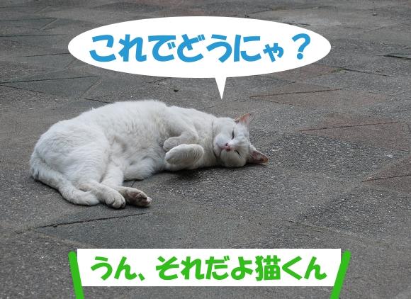これでどうにゃ? 「うん、それだよ猫くん」