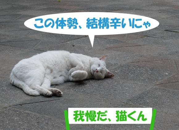 この体勢、結構辛いにゃ 「我慢だ、猫くん」