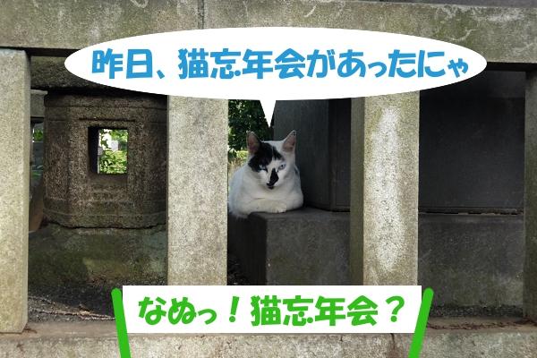 昨日、猫忘年会があったにゃ 「なぬっ!猫忘年会!?」