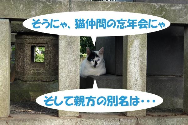 そうにゃ、猫仲間の忘年会にゃ、そして親方の別名は・・・