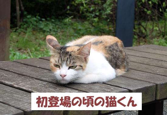 初登場の頃の猫くん