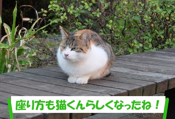 「座り方も猫くんらしくなったね!」