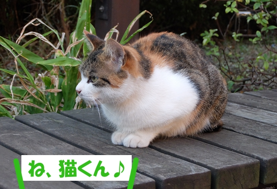 「ね、猫くん♪」