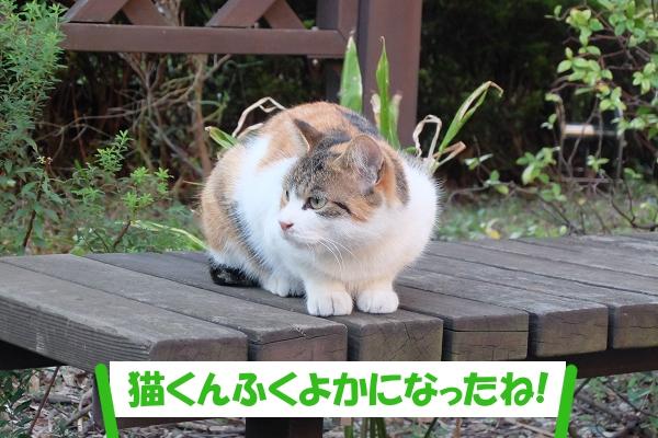 「猫くんふくよかになったね!」