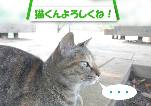 「猫くんよろしくね」