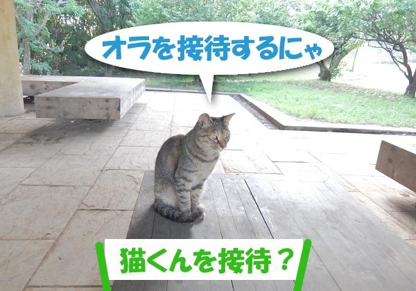 オラを接待するにゃ  「猫くんを接待?」