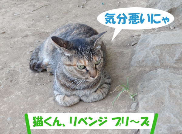 気分悪いにゃ 「猫くん、リベンジ プリ~ズ」