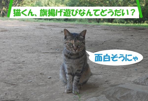 「猫くん、旗揚げ遊びなんてどうだい?」 面白そうにゃ