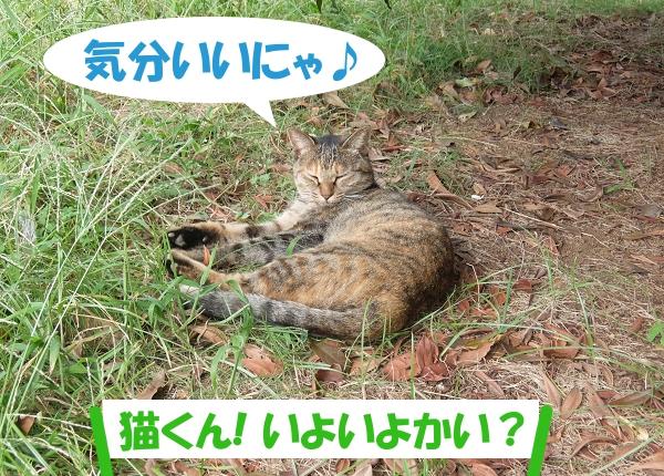 気分いいにゃ♪ 「猫くん、いよいよかい?」
