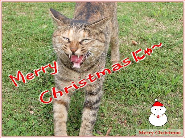 メリークリスマスにゃ~