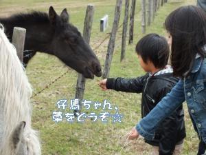 DSCF0834_convert_20120510153742.jpg