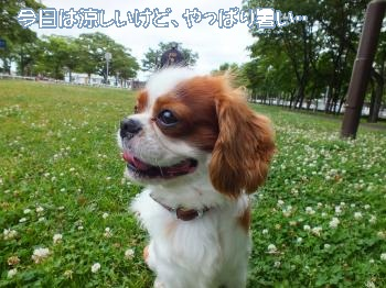 DSCF2102_convert_20120710155409.jpg