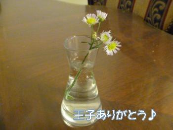 P1000952_convert_20120910170842.jpg