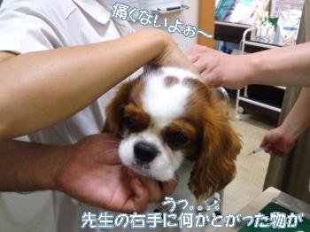 PAP_0010_convert_20120813225937.jpg