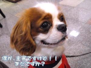 mini_120323_19150002_convert_20120401075013.jpg