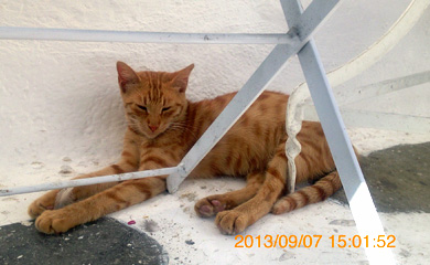 ミコノス猫01