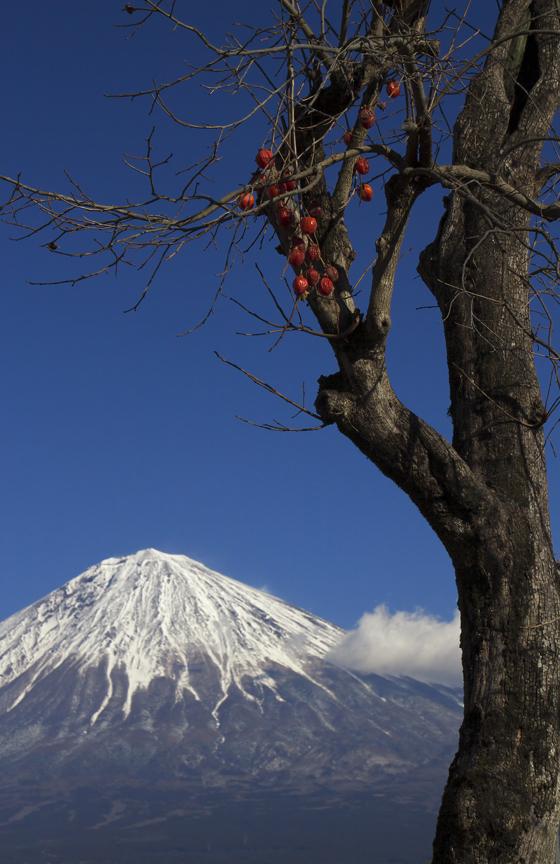 柚野の富士山-691