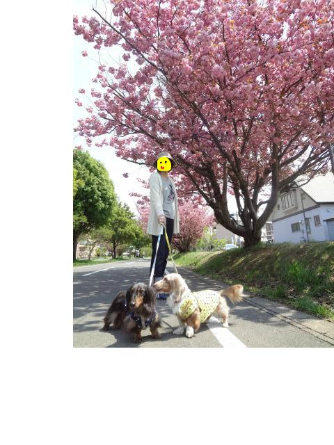 snap_chapuco_201261214339[1]