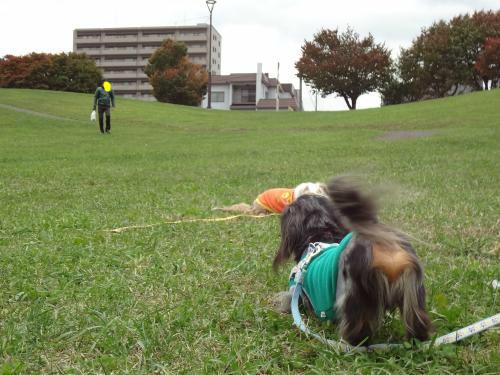 snap_chapuco_2012121223322.jpg