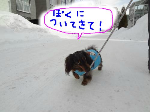 snap_chapuco_20123020219.jpg