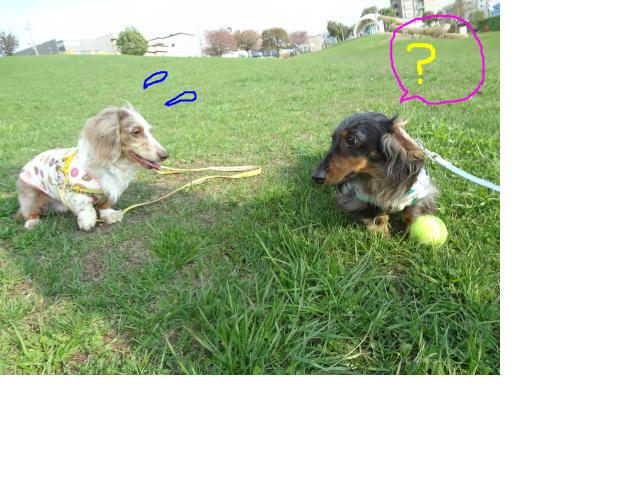snap_chapuco_201256111012.jpg