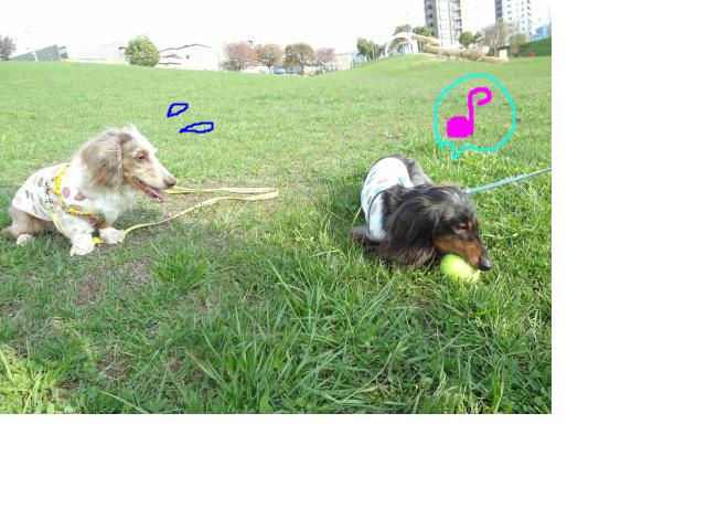 snap_chapuco_20125611826.jpg