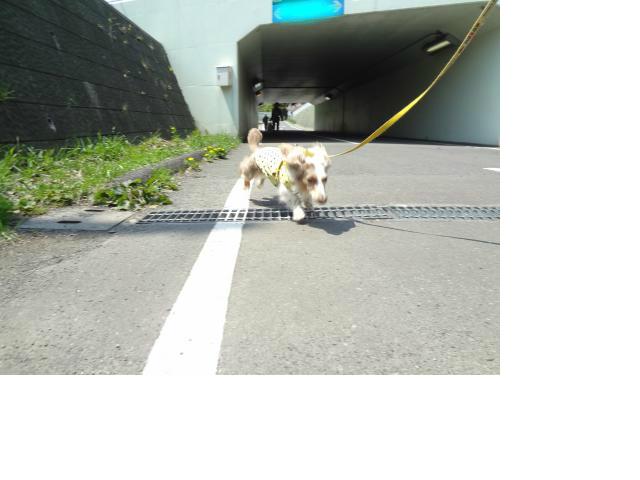 snap_chapuco_201261213641.jpg